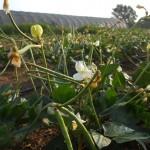 DSCN7372_crop