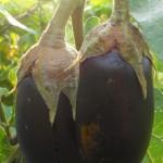 DSCN7425_crop