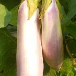 DSCN7430_crop